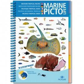 Marine Pictolife Pacifique Asiatique
