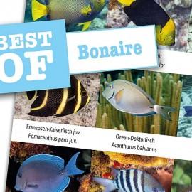 DiveSticker autocollant Bonaire