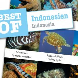 DiveSticker autocollants Indonésie