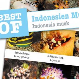 DiveSticker autocollants Indonésie Muck