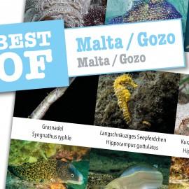 DiveSticker autocollants Malte/Gozo