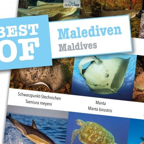 DiveSticker autocollants Maldives